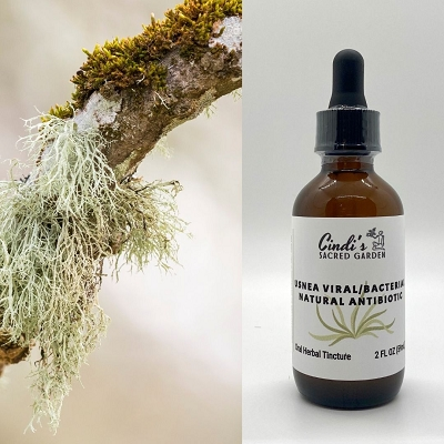 Usnea Tincture - Natural Antibiotic/Antiviral